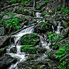 Crabtree falls by Dave Parrish