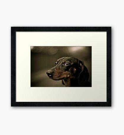 Sly eye Framed Print