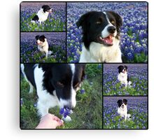 Champ - Easter 2009 Canvas Print