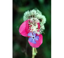 Floral Musings Photographic Print
