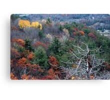 Late Autumn Forest Canvas Print