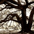 the giant old oak by Shannon Byous Ruddy