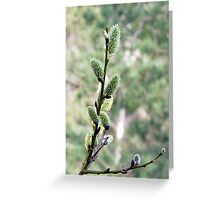 Salix Flowers Greeting Card