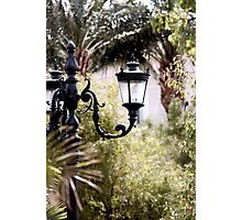 Lantern Jungle Photographic Print