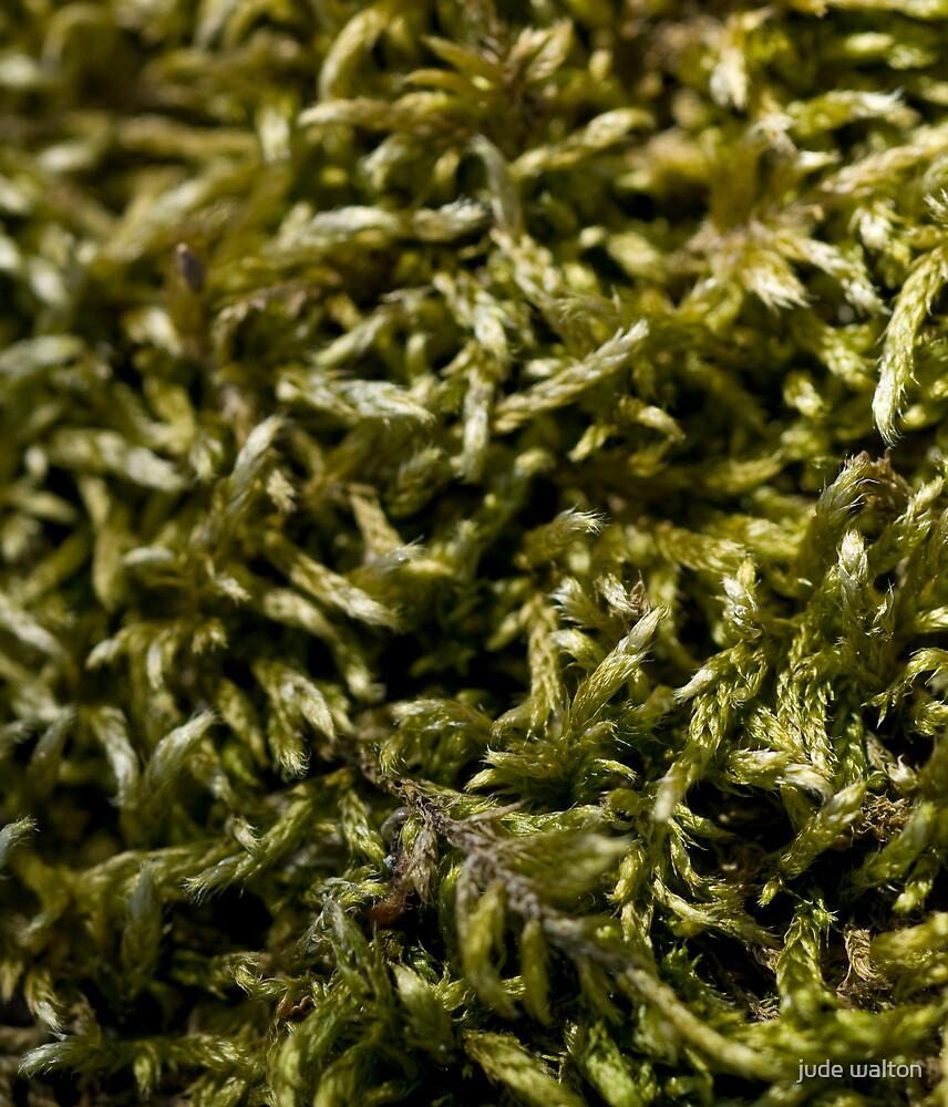 knitted moss by jude walton