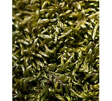 knitted moss Photographic Print