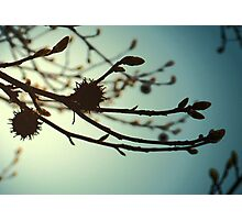 A New Beginning Photographic Print