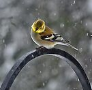 -Can Spring Be Far Behind? by T.J. Martin
