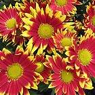 Fiery Orange and Yellow Dahlais by BlueMoonRose