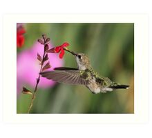 Palomino Valley Hummer Art Print