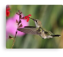 Palomino Valley Hummer Canvas Print
