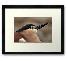 Nankeen Night Heron Look Up Framed Print