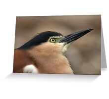 Nankeen Night Heron Look Up Greeting Card
