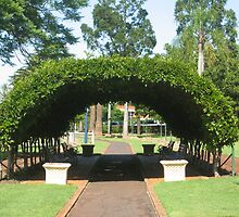 Winsteria vine covered in leaves at Laurel Bank Park, Toowoomba, Qld. Australia by Marilyn Baldey