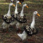 Ducks in gold skirts - Churchill Island by Bev Pascoe