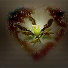 Feeling in my Heart by Judi Taylor