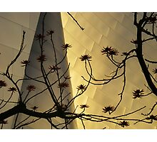silhouette, disney concert hall Photographic Print