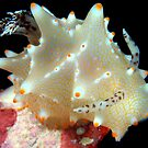 Nudibranchs  by MattTworkowski