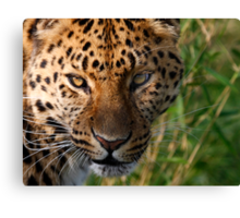 Sly Look Canvas Print