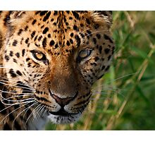 Sly Look Photographic Print