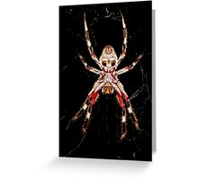 Orb-Weaving Spider  Ventral view Greeting Card