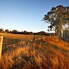 Newham near Hanging Rock by Darren Stones