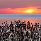 Cana Island Sunrise by Kenneth Keifer