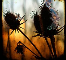 icy thistle by gothicolors
