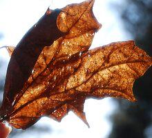 autumn heart  by leylaa