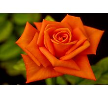 THE ORANGE ROSE Photographic Print