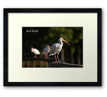 Bird Walk Framed Print