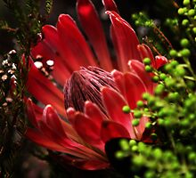 Exotic by nature by chrispua