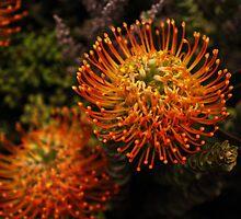 Anemone on Land  by chrispua