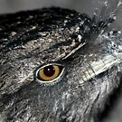 Tawny Frogmouth by Larry Trupp