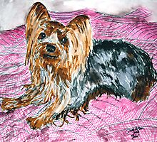 yorkshire terrier art painting by derekmccrea