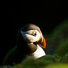 The Sad Puffin. by Terry Mooney