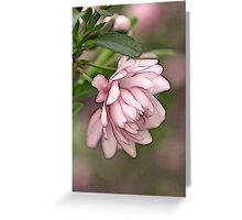Pink Flowering Almond Greeting Card