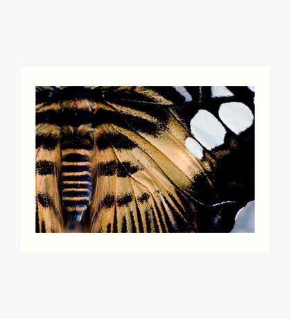 Parthenos sylvia phillippensisr Art Print
