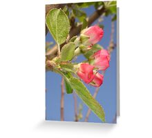 Apple Blossom Newbie Greeting Card