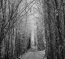 Into the woods by Anthony Woolley