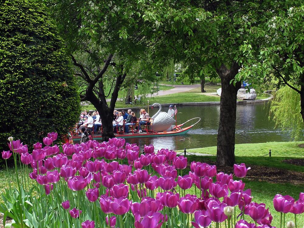 Swan Boat Ride by vgbg