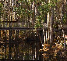 Okefenokee Swamp by KellyEverill
