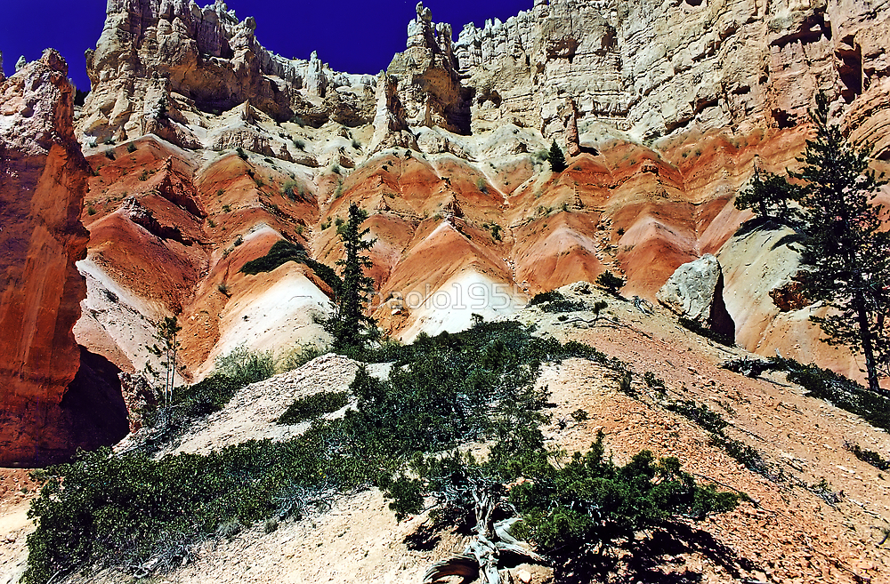 From the Bottom - Bryce Canyon National Park - Utah - U.S.A  by paolo1955