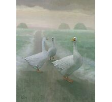 Winter Geese Photographic Print
