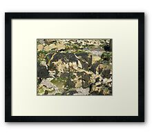 Seaweed on Rocks Framed Print