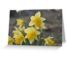 Dainty Daffodils Greeting Card
