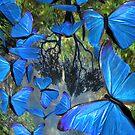 blue butterflies by mxsara