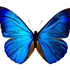 Blue Butterfly by monsterplanet