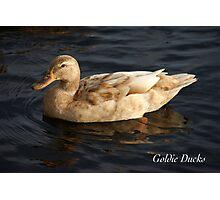 Goldie Ducks Photographic Print
