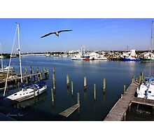 The Boatyard ~ A Gull's View Photographic Print